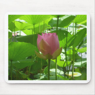 Pink Water Lily - Now Opening Mouse Pad