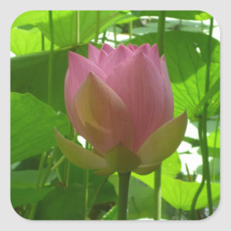 Pink Water Lily - Now Opening Square Sticker