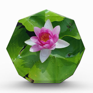 Pink Water Lily On Green Pads Photography Award