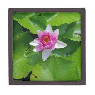 Pink Water Lily On Green Pads Photography Keepsake Box