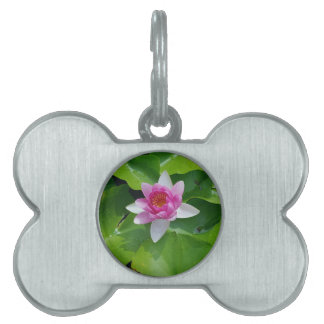 Pink Water Lily On Green Pads Photography Pet Name Tag