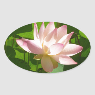 Pink Water Lily Oval Sticker