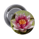 Pink Water Lily Pinback Button