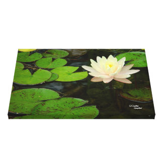 Pink water lily pond Stretched Canvas Print