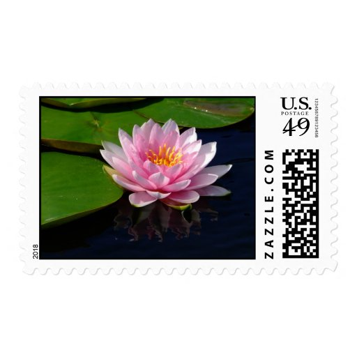 Pink Water Lily Postage Stamp