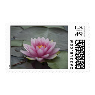 Pink Water Lily Postage Stamps