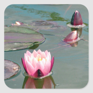 Pink water lily square sticker
