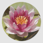 Pink Water Lily Stickers