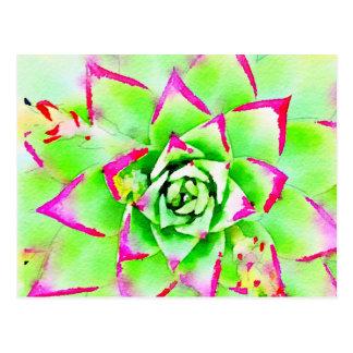 Pink Watercolor Succulent Postcard