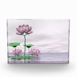 Pink waterlilies and lotus flowers acrylic award