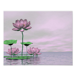 Pink waterlilies and lotus flowers poster