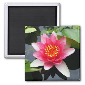 Pink Waterlily 2 Inch Square Magnet