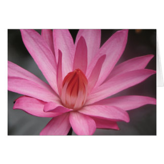 Pink Waterlily Card