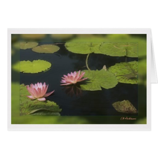 Pink waterlily - Customized Card