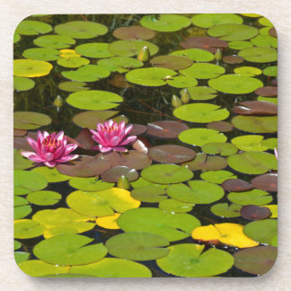 Pink waterlily garden pond beverage coaster