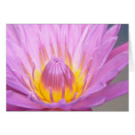 Pink Waterlily Notecard Greeting Cards