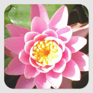 Pink Waterlily Square Sticker