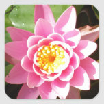 Pink Waterlily Square Stickers