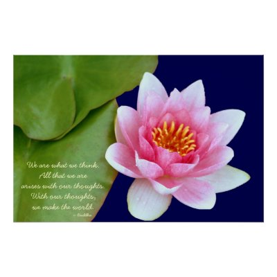Pink Waterlily With Buddha Quote Posters