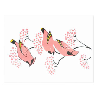 Pink waxwings on Pink berries Postcard