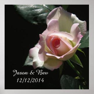 Pink Wedding Rose Poster