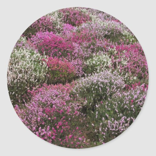 Pink, white and Purple bushes blossom Round Stickers