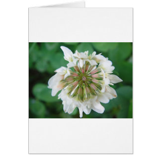 Pink-white clover blossom card