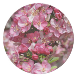 Pink & White Dogwood Tree Flowers Plate
