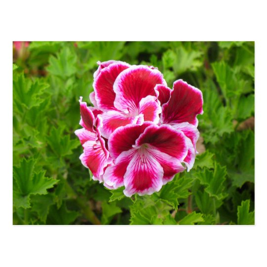 pink white flower postcard