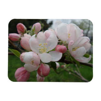 """Pink White Fower 3""""x4"""" Magnet"""
