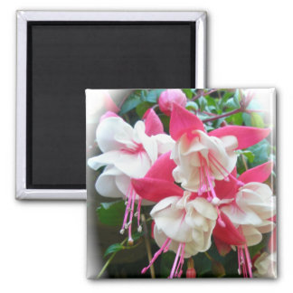 Pink & White Fuschia Magnet