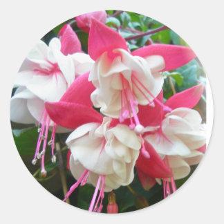 Pink & White Fuschia Stickers
