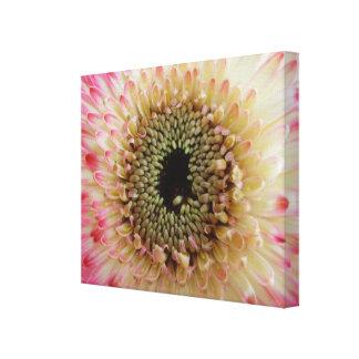 Pink & White Gerbera Daisy Close Up Canvas Canvas Prints