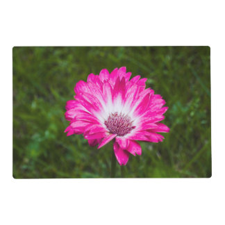 Pink & White Gerbera Daisy in Bloom Placemat