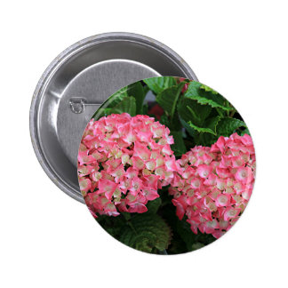 Pink & white hydrangeas pinback button