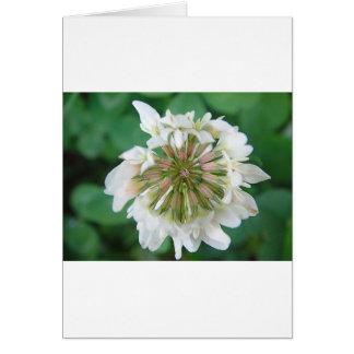 Pink-white Kleeblüte Greeting Card