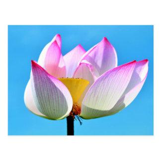 Pink-white lotus flower postcard
