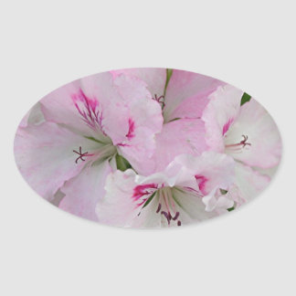 Pink & white Pelargonium flower in bloom Oval Sticker