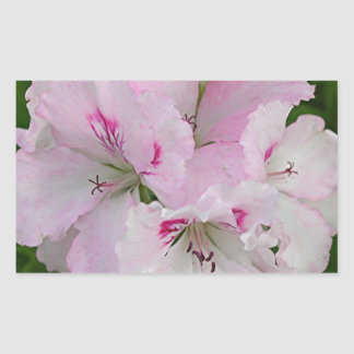 Pink & white Pelargonium flower in bloom Rectangular Stickers