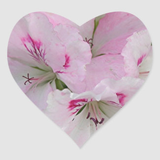 Pink & white Pelargonium flower in bloom Heart Stickers
