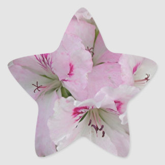 Pink & white Pelargonium flower in bloom Star Stickers