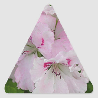 Pink & white Pelargonium flower in bloom Triangle Sticker