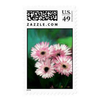 Pink & White Stamp
