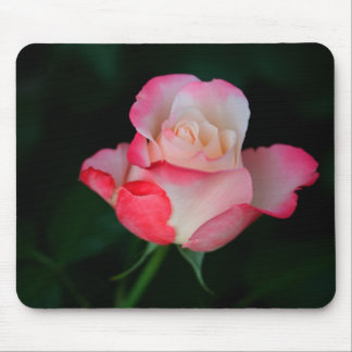 Pink-White Rose Mouse Pad
