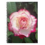 Pink White Rose Photo Notebook Notebooks