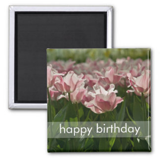 Pink & White Variegated Tulips DSC0871 2 Inch Square Magnet