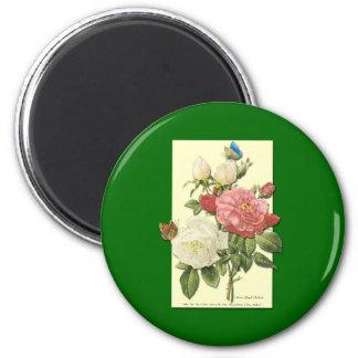 Pink White Vintage Botanical Roses Magnet