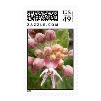 Pink Wild Flower Stamp