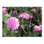 Pink Wild Flower Postcard