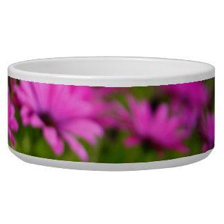 Pink wild flowers bowl
